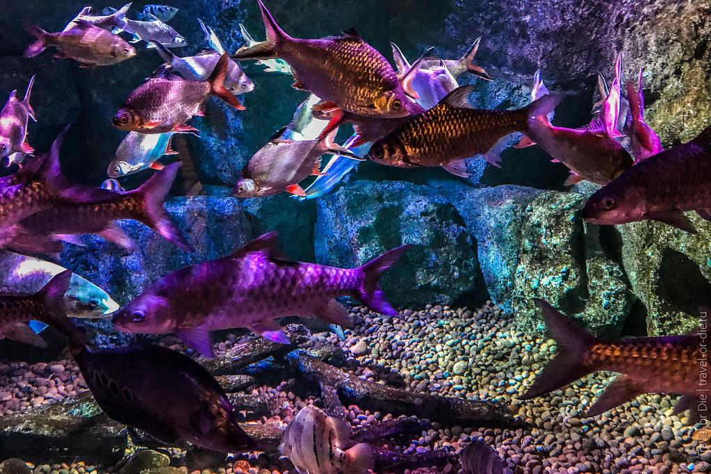 SEA-LIFE-Bangkok-Ocean-World-9324