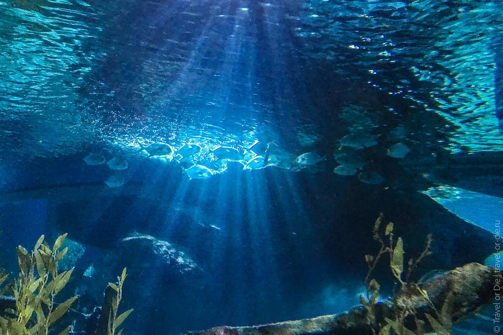 SEA-LIFE-Bangkok-Ocean-World-9351