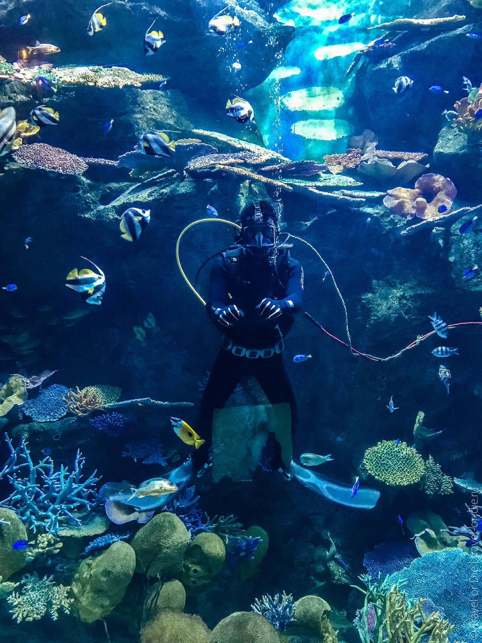 SEA-LIFE-Bangkok-Ocean-World-9367