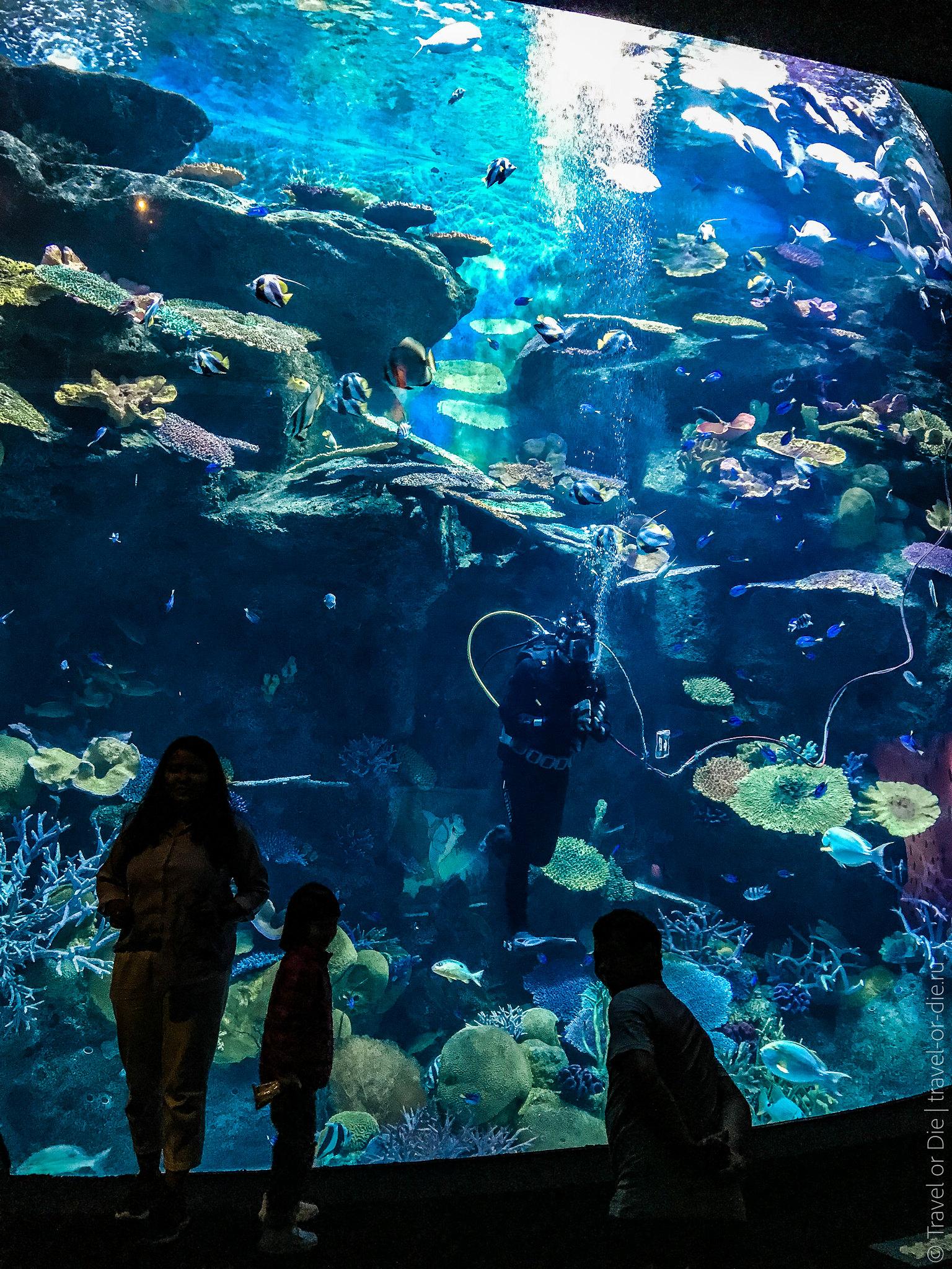 SEA-LIFE-Bangkok-Ocean-World-9369