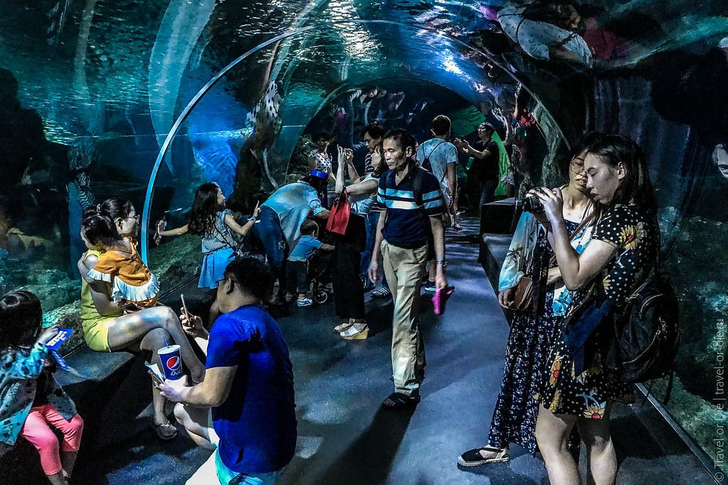 SEA-LIFE-Bangkok-Ocean-World-9374