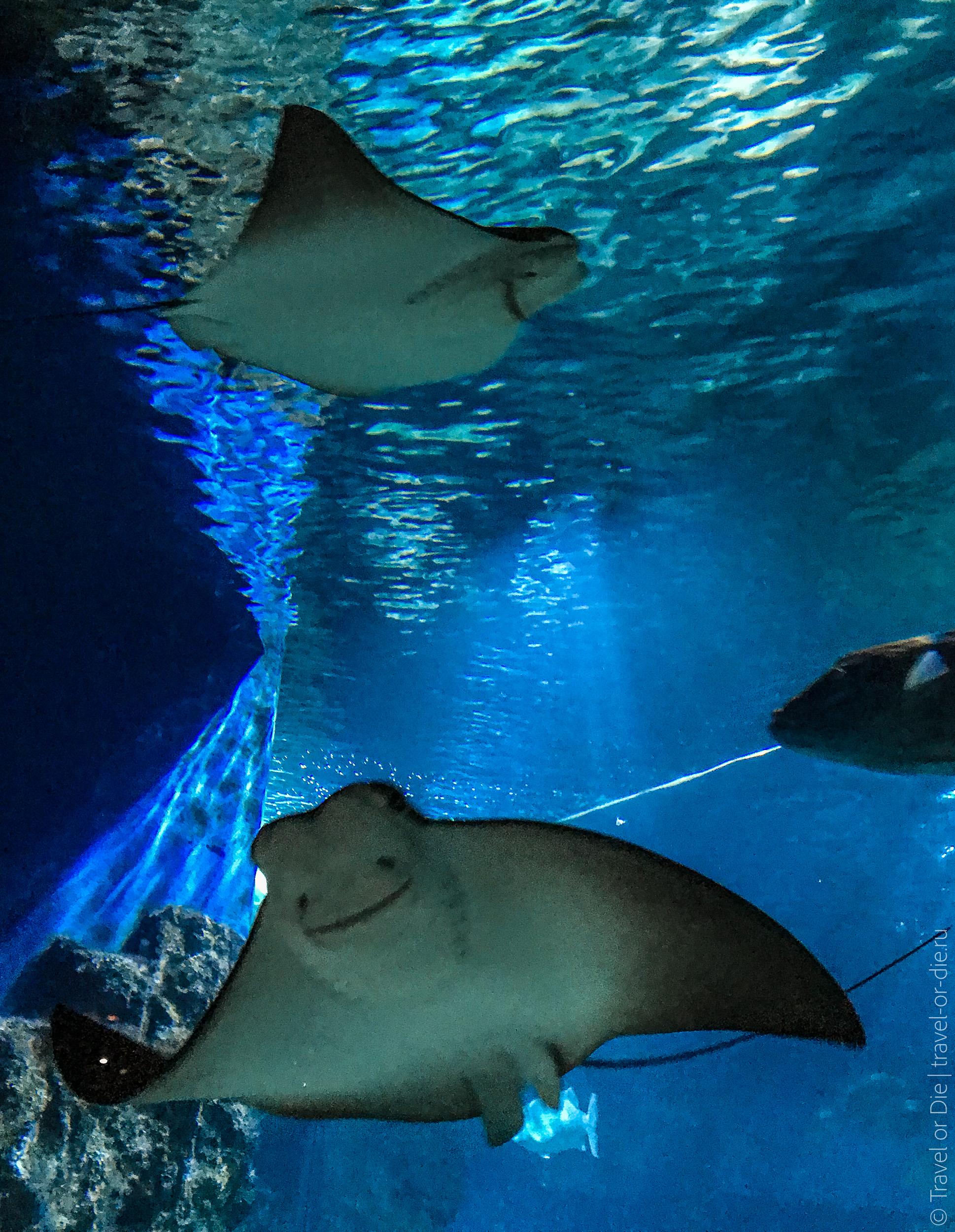 SEA-LIFE-Bangkok-Ocean-World-9446
