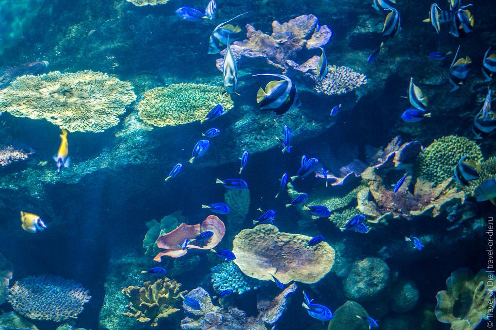 SEA-LIFE-Bangkok-Ocean-World-9371