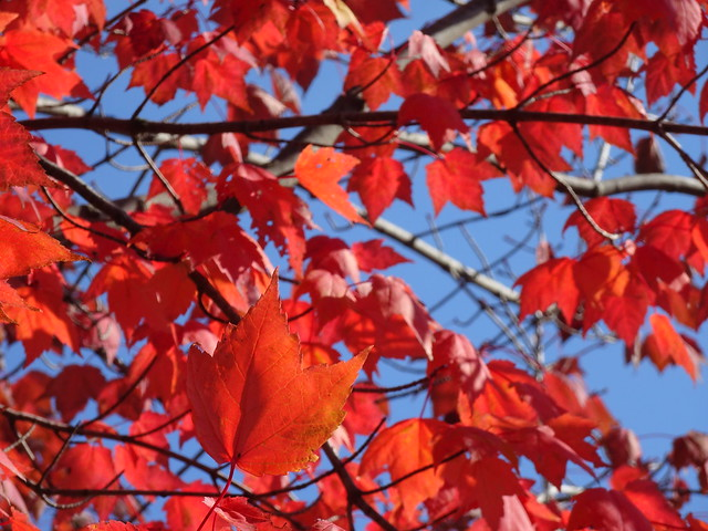 Sunday Greetings: A colourful Autumn series (+4)