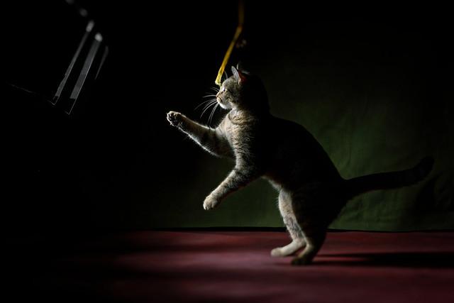 'Tiny Dancer'