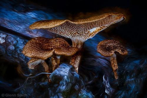 Mushroom blues