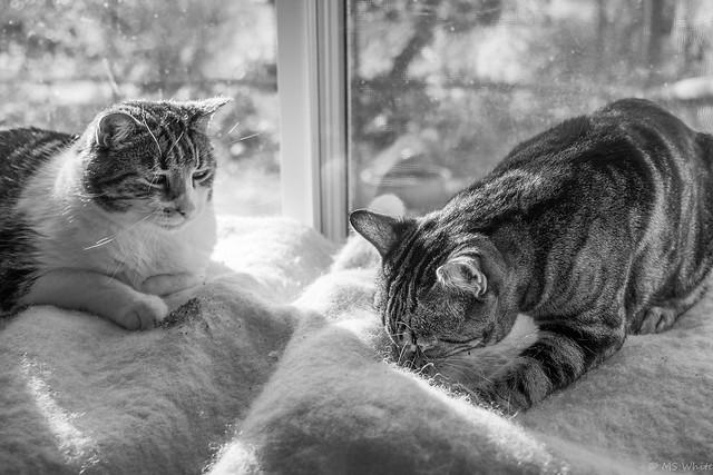 The catnip inspectors.