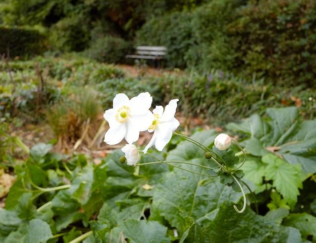 Sexbys Garden @ SE15