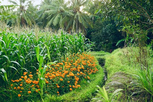 verdant & orange