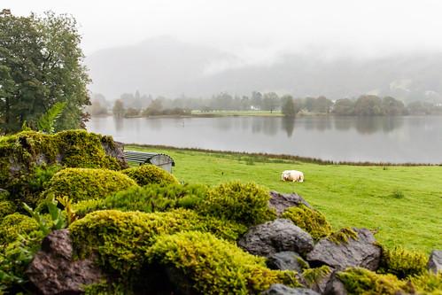 grasmere lakedistrict lake water mountain landscape mist cloud field grass sheep stone wall moss tree cumbria england