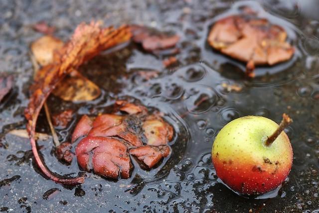 Autumn....