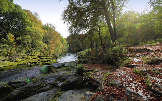 Strid Woods and the River Wharfe