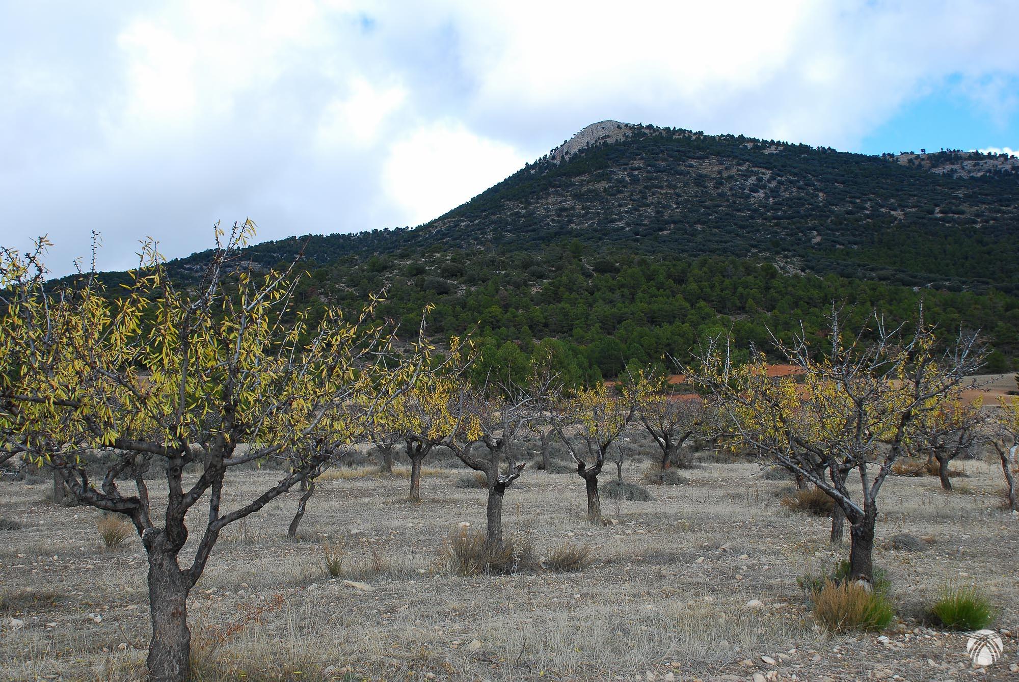 Peña de Moratalla y almendros