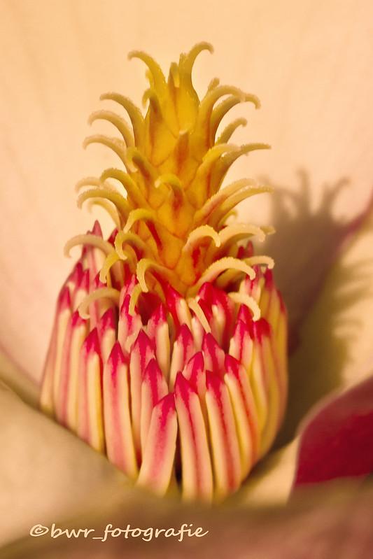 In einer Tulpenbaumblüte