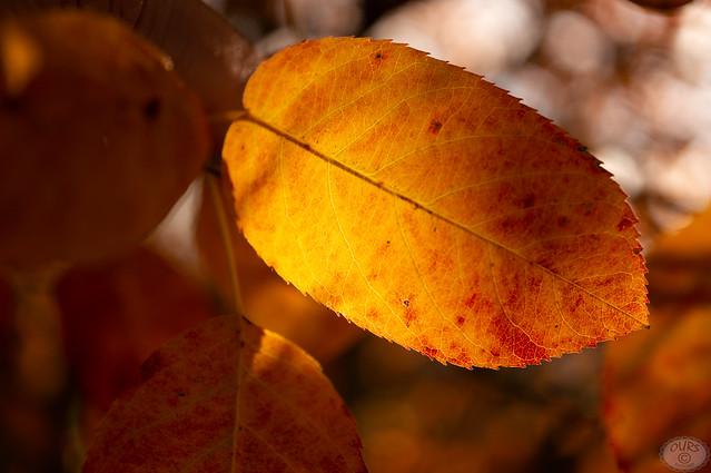 the golden light of autumn