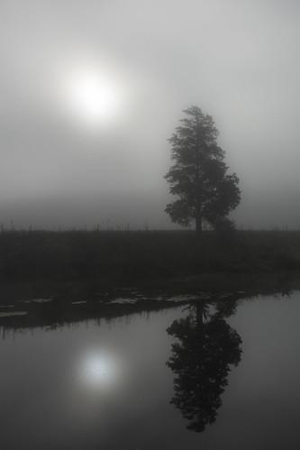 westvirginia wv reflection mist river bw blackandwhite capon caponriver fall autumn sun sunrise hallock davehallock nikon d7100 nikond7100