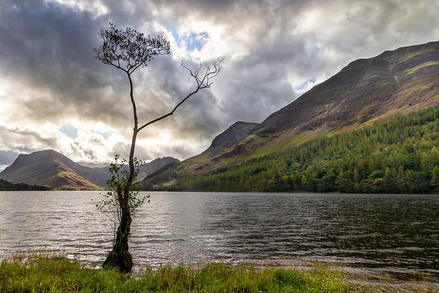 Lone Tree, Buttermere, Cumbria