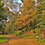 Autumn colours in Preston - Avenham Park