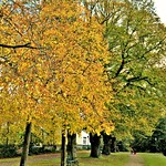 Autumn colours in Preston - Avenham