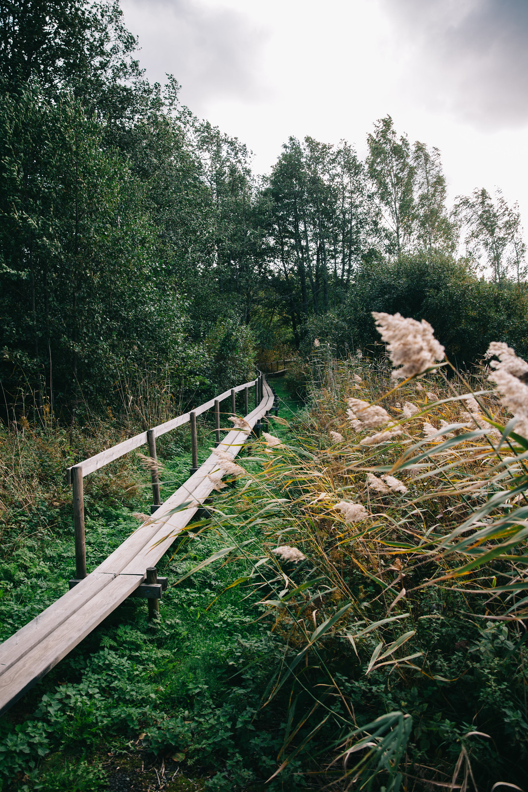 Westerholminpolku Nauvo