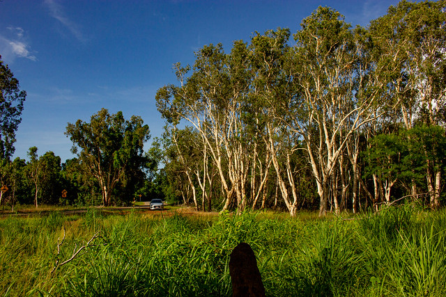 Bush near Buffalo Creek Beach, Darwin, Northern Territory, Australia