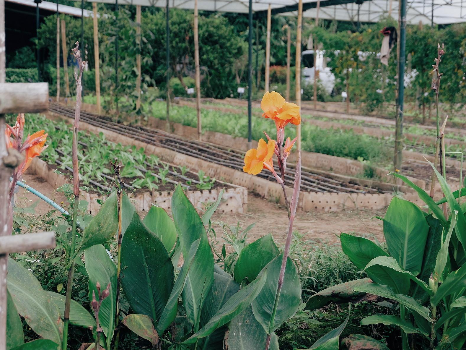 Sanctuario Nature Farms
