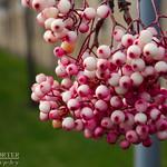 Berries - IMG_3370 - Edited