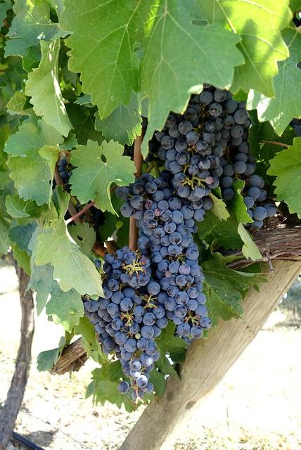 Bodega Marqués de Riscal, Rioja Alavesa