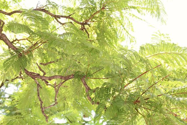 I ♡ trees
