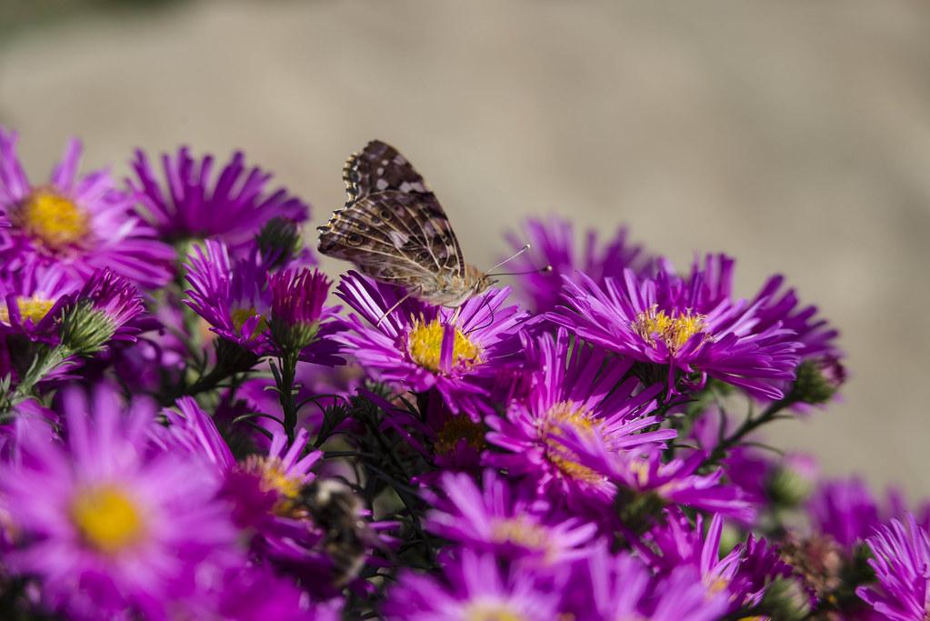 Октябрь, цветение, бабочки.