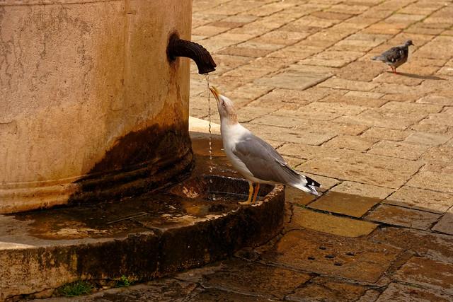 Venice Cannaregio / The thirsty gull