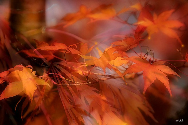 Autumn. A Slider:-)