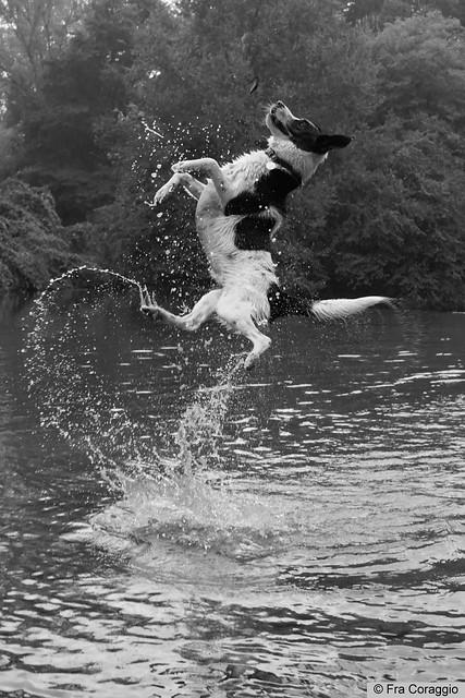 Water Stunts - Acrobazie nell'acqua