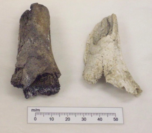 Two fragments of humeri (arm bones) from the same person showing different degrees of burning. The one on the left is dark in colour and the one on the right is almost white