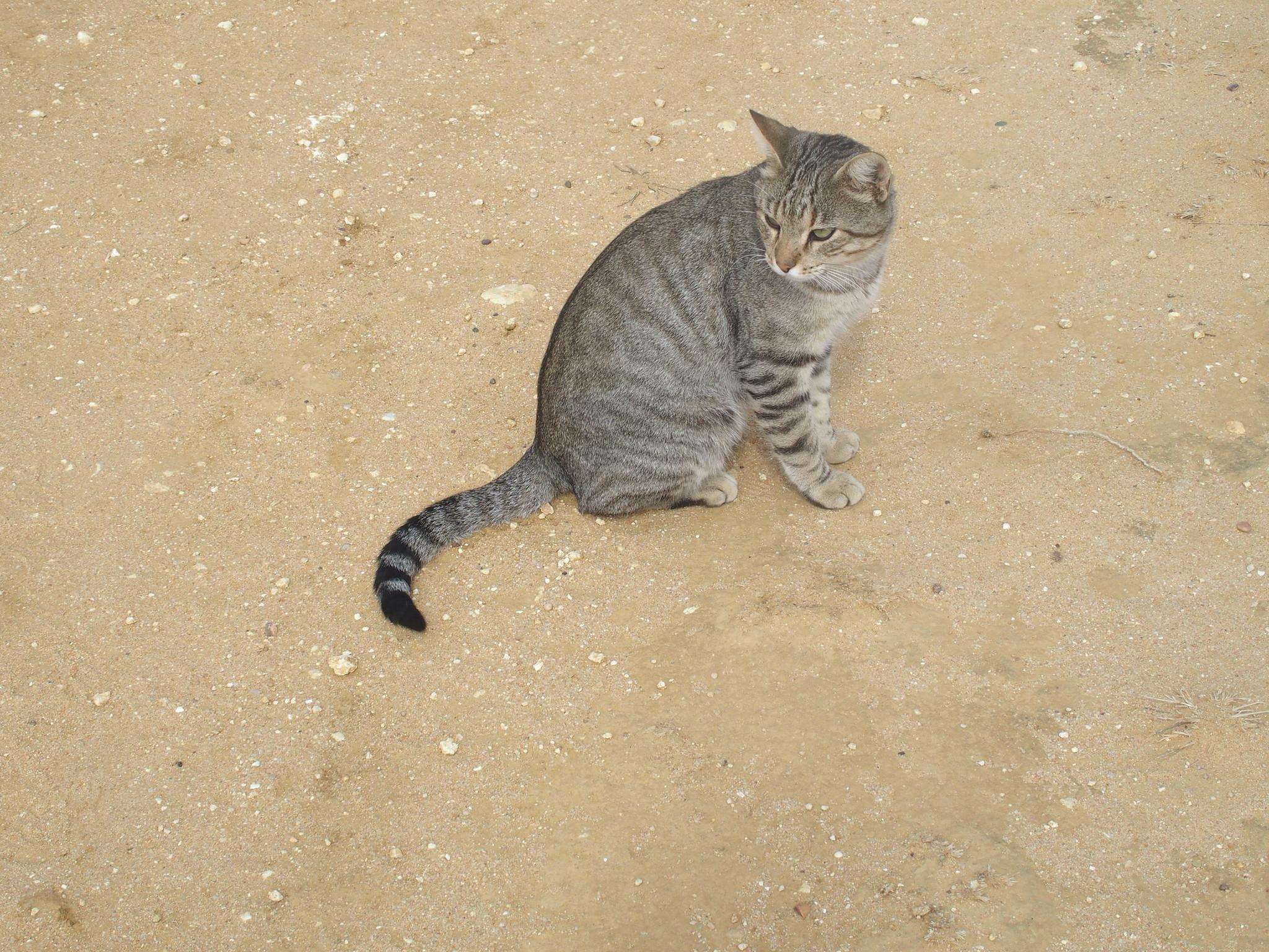 A18 Katten