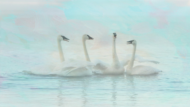 Four Swans Watercolor Group Play