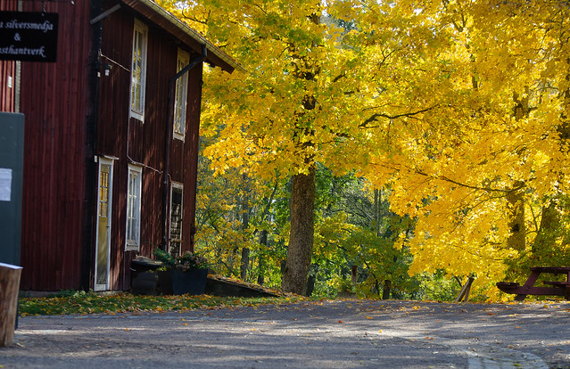 Yellow, at the heart of the autumn
