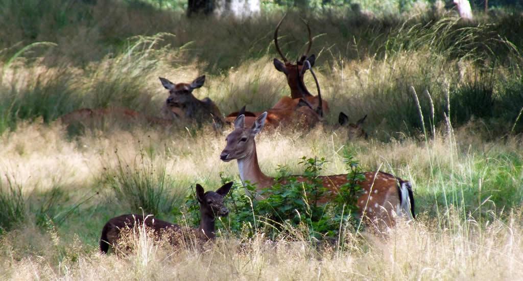 National Park De Hoge Veluwe, The Netherlands | Your Dutch Guide