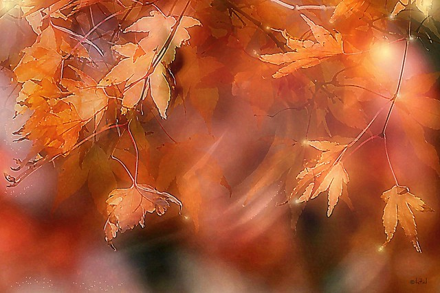 Fall day. A Slider:-)