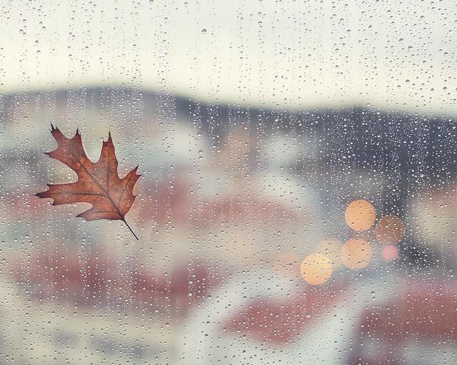 Loving autumn41/52 {Seasons 2019} My DiaryOtoño