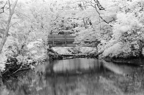 acp 2019 grant park 35mm ir _0008 | by andrewcpain
