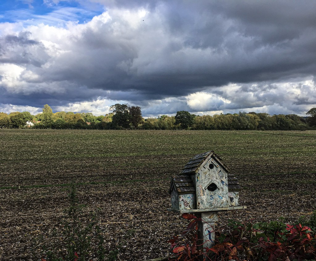A bird house in the field is worth..