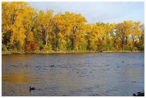 beautiful nature P9610-2