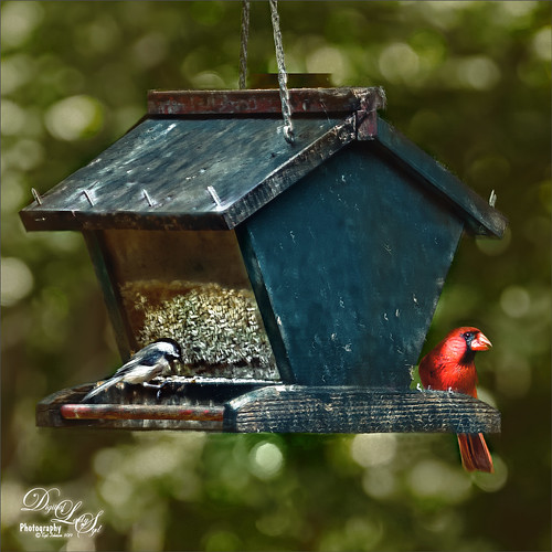 Image of a bird feeder with a couple of birds