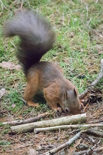 Weres my nuts
