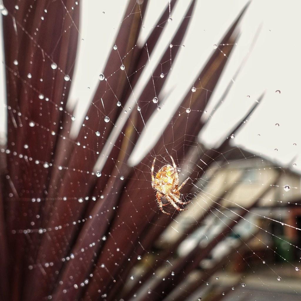 Spider shower