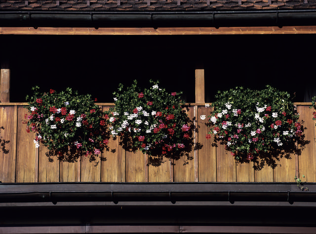 Fleurs de Suisse - 11  (MF Velvia 100)