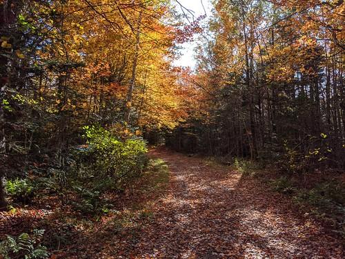victoriapark novascotia canada googlepixel3xl autumn autumncolors fallcolors fallenleaves fall trees landscape outdoor colchestercounty shadows