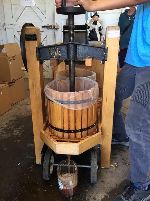 Squeezing apple cider