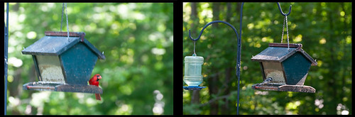 Original Raw photos of bird feeder and birds